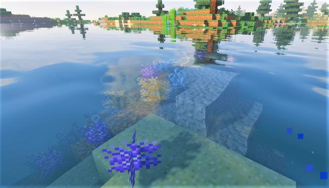 サンゴ1.png