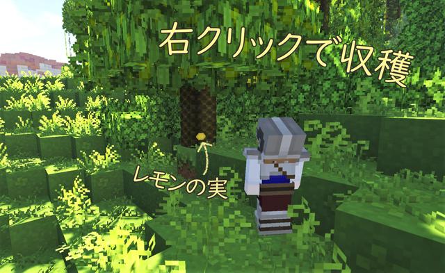 レモンの木3.png