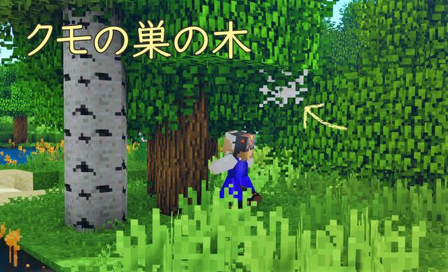 果樹 クモの木.png